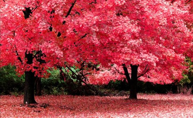Beautiful Nature Wallpaper Download Free Full Hd