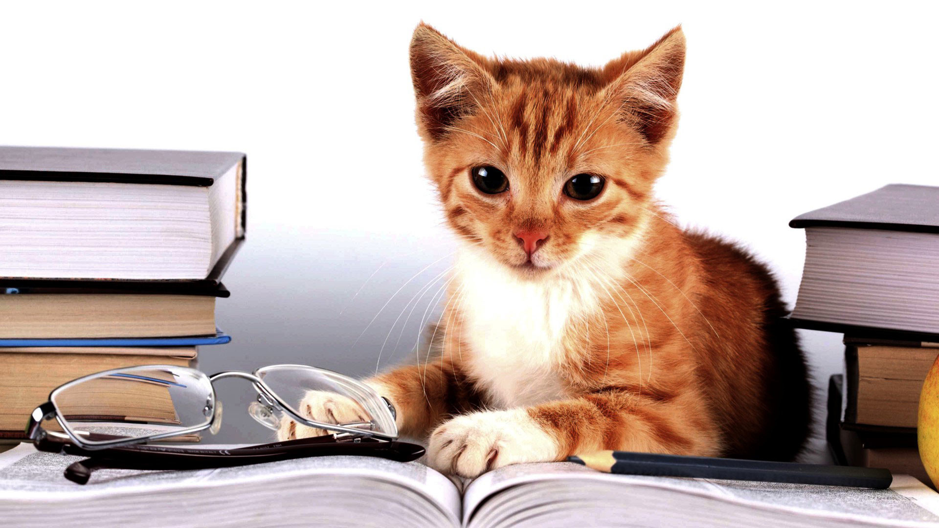 Cute Cat Studying Wallpaper Student Wallpapers 183 ① Wallpapertag