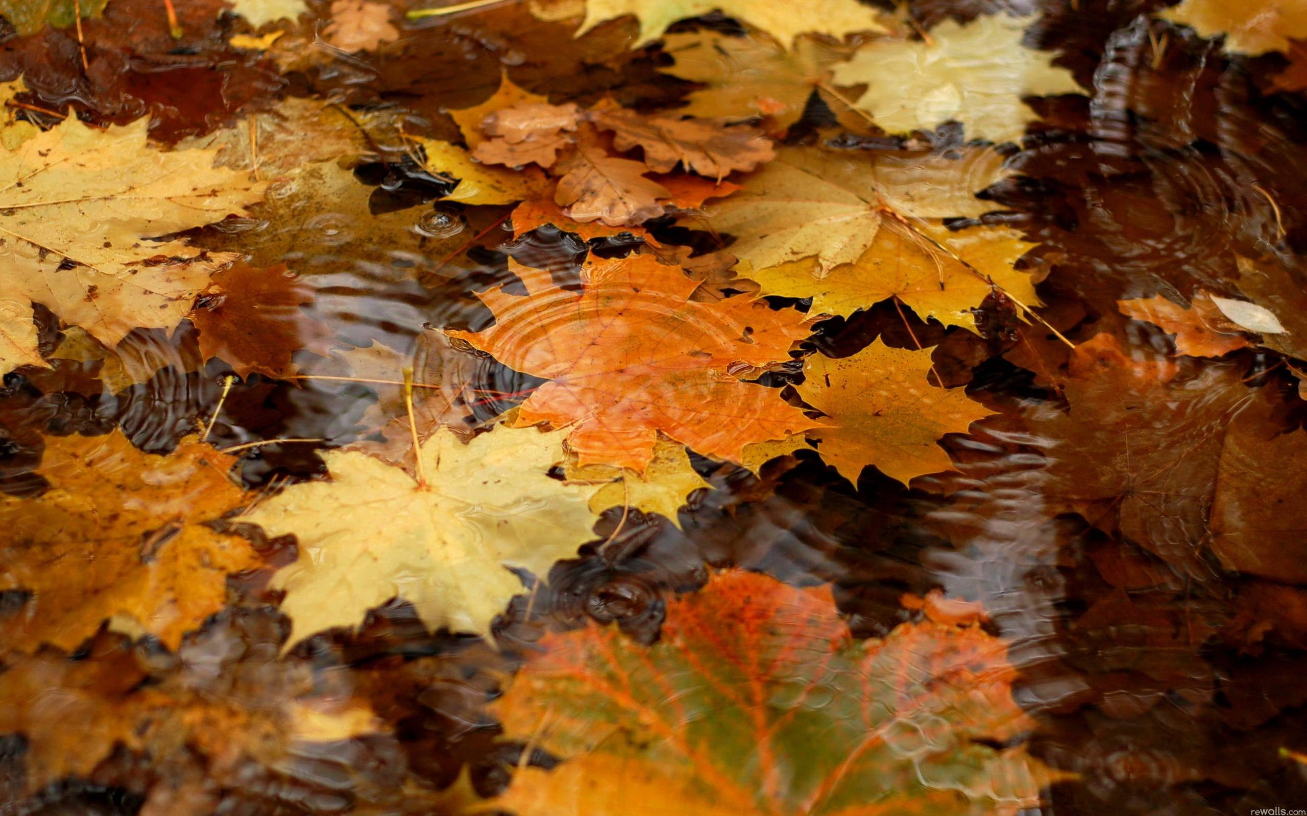 Late Fall Iphone Wallpaper Autumn Wallpaper Hd 183 ① Download Free Wallpapers For