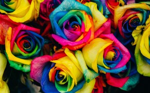 rainbow roses background flowers desktop wallpapers nature pc wallpapertag