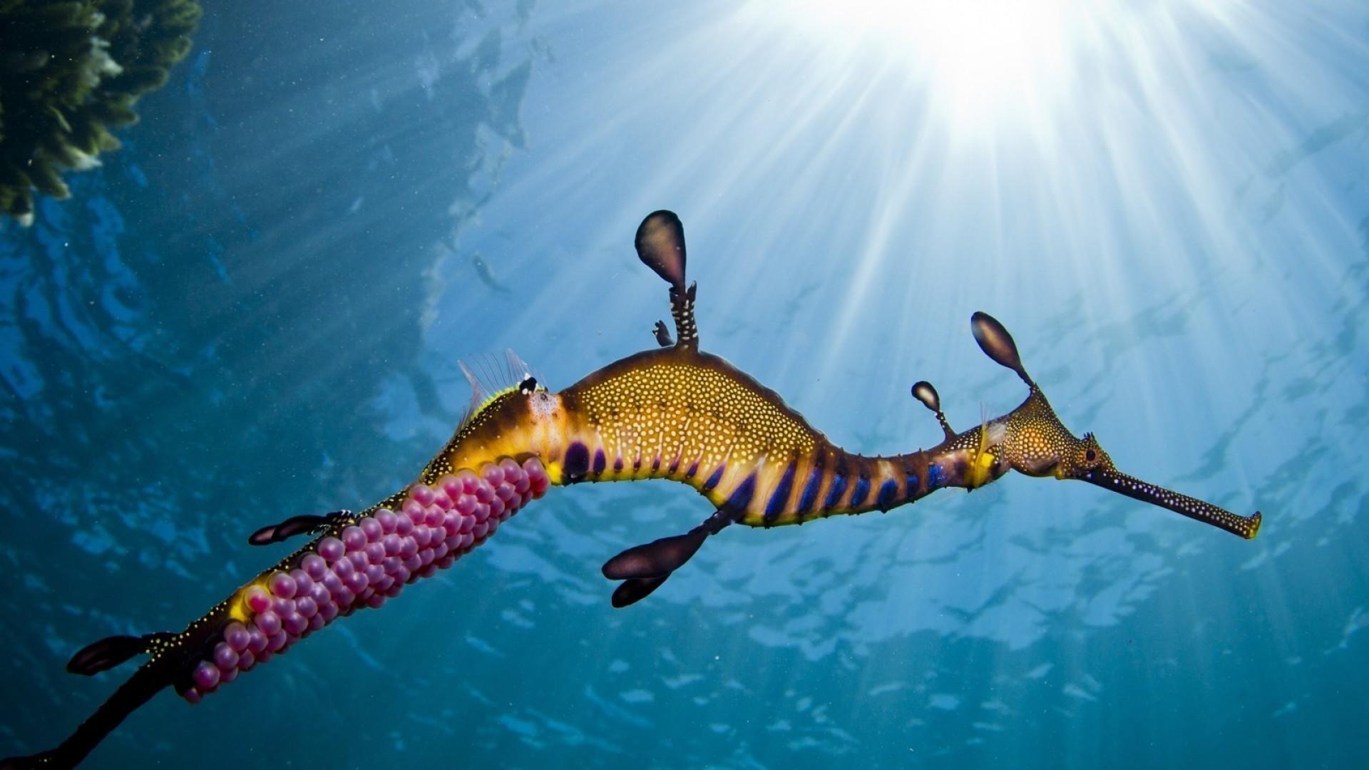 Hd Ocean Life Wallpapers Seahorse Wallpaper 183 ① Wallpapertag