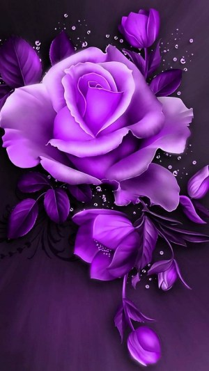 rose purple background pink wallpapers wallpapertag