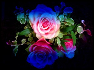 roses colourful rainbow background flowers rose backgrounds wallpapers glitter colorful pretty flower desktop nature definition windows resolution bwallpapers wall 1440