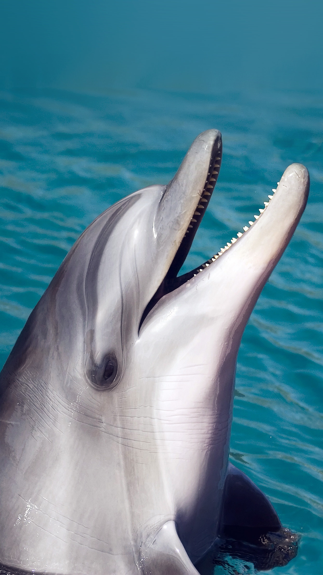 Free Hd Cute Baby Wallpaper Cute Dolphin Wallpaper 183 ① Wallpapertag