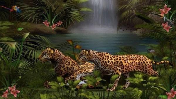 Wildlife Desktop Backgrounds