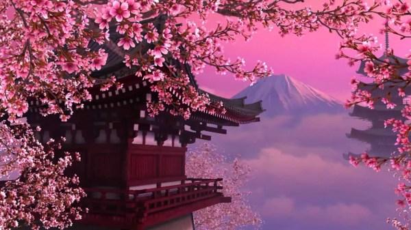 Cherry Blossom Background Wallpapertag