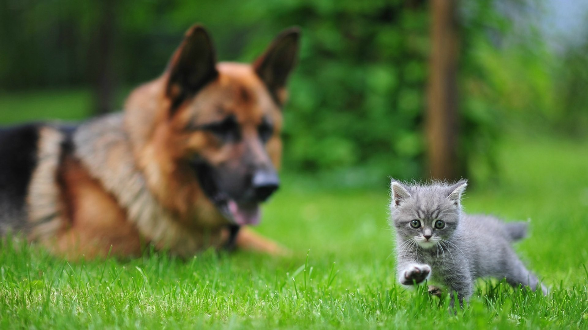 Cute Wallpapers Of Kittens And Puppies Cats And Dogs Wallpaper 183 ① Wallpapertag