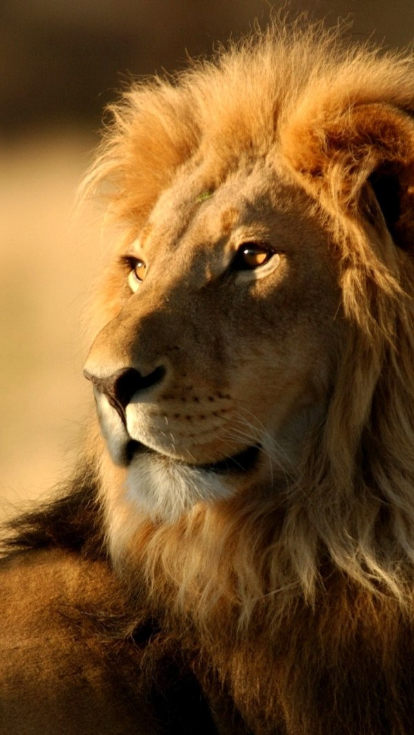 20 Angry Lion Pictures And Ideas On Stem Education Caucus