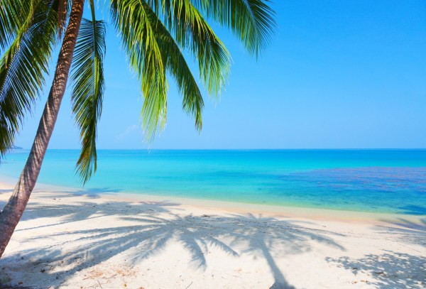 Florida Beach with Palm Trees Wallpaper