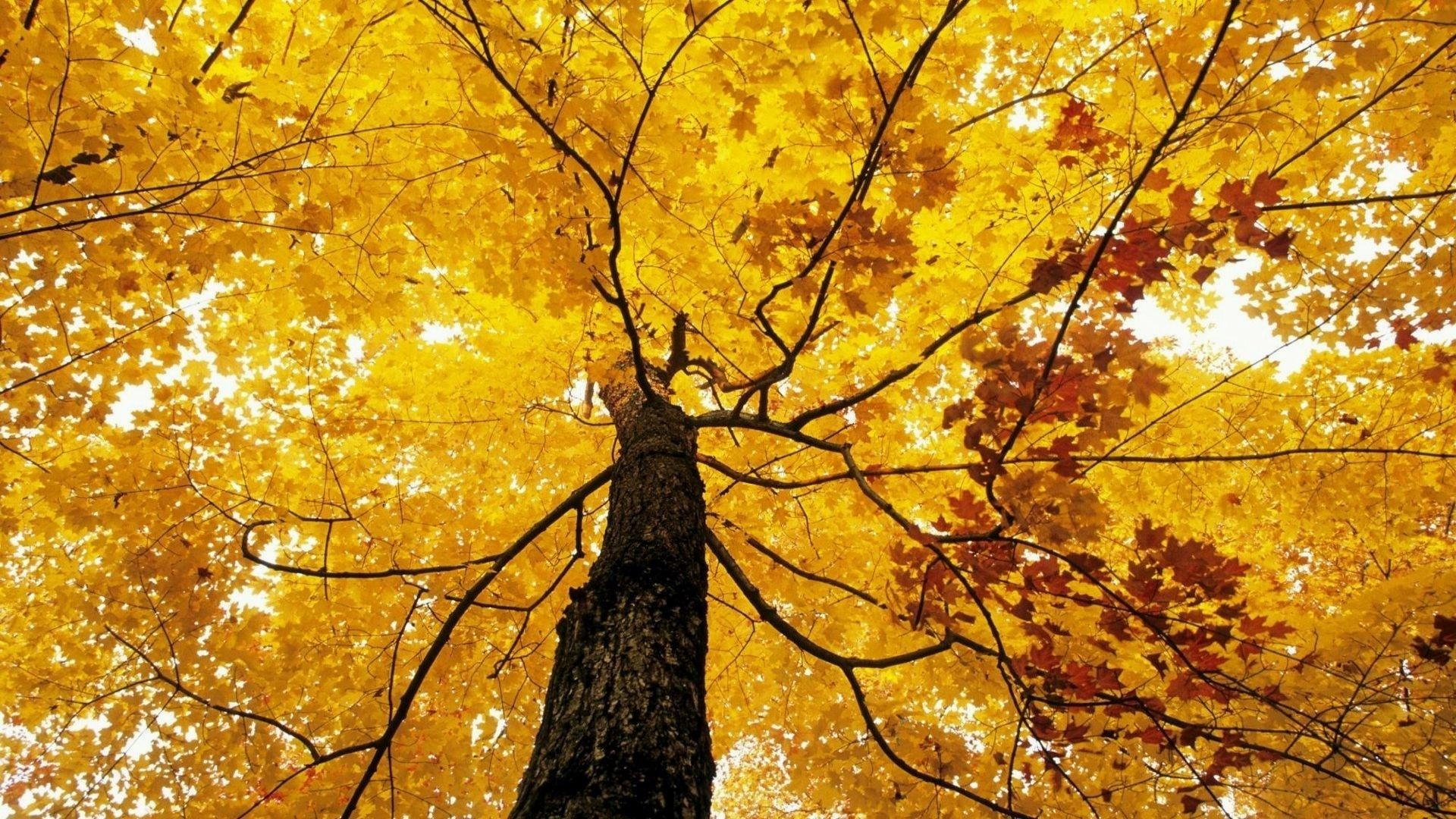 Fall Foliage Wallpaper For Computer Fall Foliage Wallpaper For Desktop 183 ① Wallpapertag