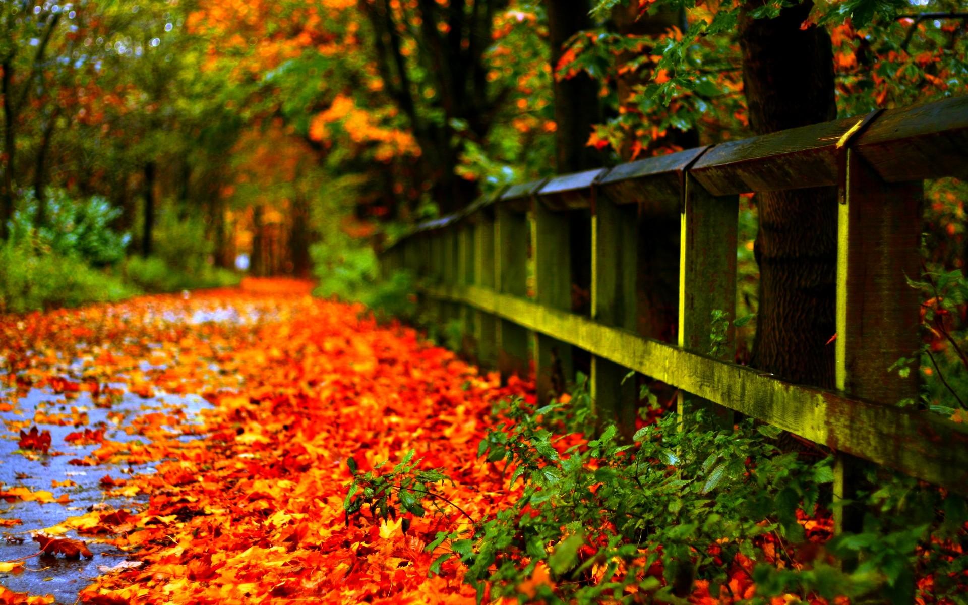 Fall Leaves Wallpaper Macbook Fall Colors Wallpaper Background 183 ① Wallpapertag