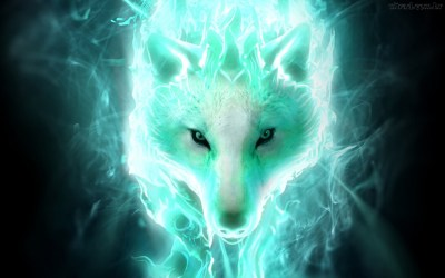 wolf cool backgrounds wallpapertag