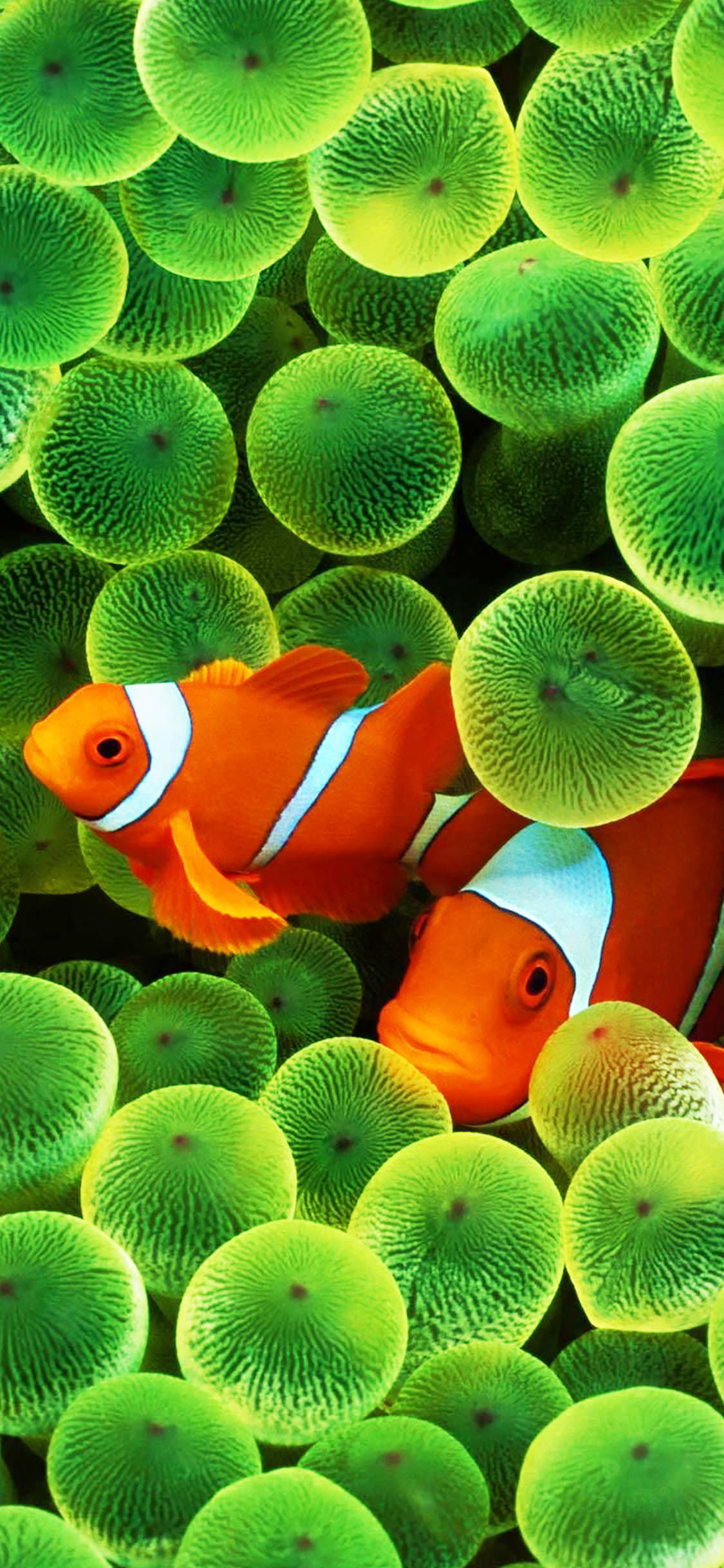 Nemo Wallpaper Iphone X Clown Fish Wallpaper 183 ① Wallpapertag