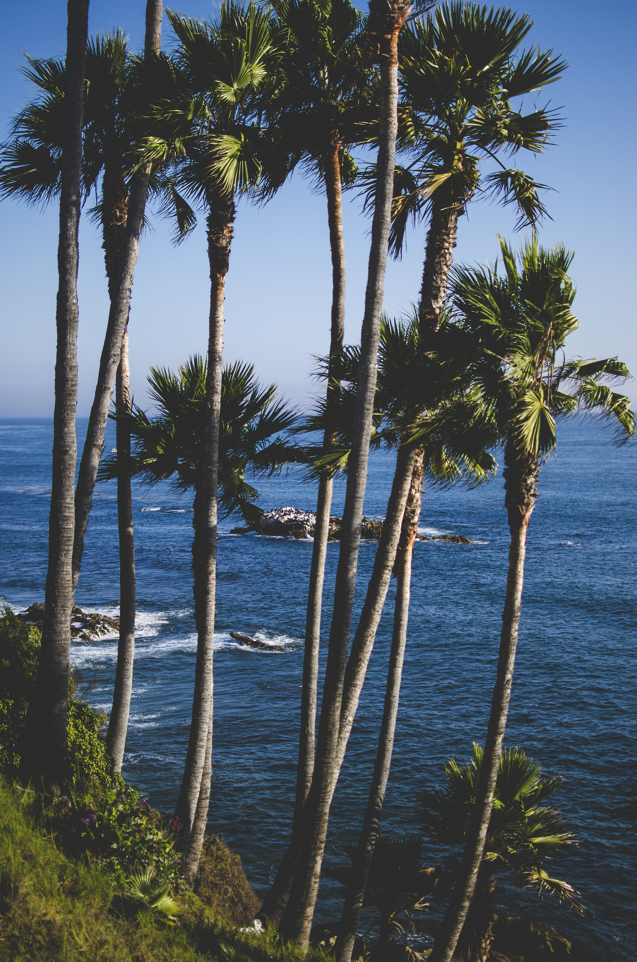 Palm Tree Wallpaper For Iphone X Laguna Beach Wallpaper 183 ① Wallpapertag