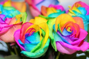 rainbow roses background flowers colorful flower wallpapertag 4k