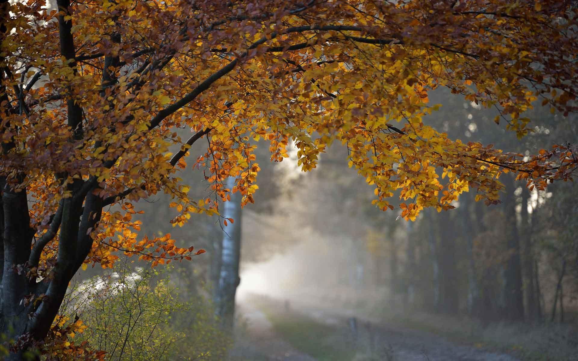Wallpaper Images Of Fall Trees Lined Lake Nature Rain Wallpaper 183 ① Wallpapertag