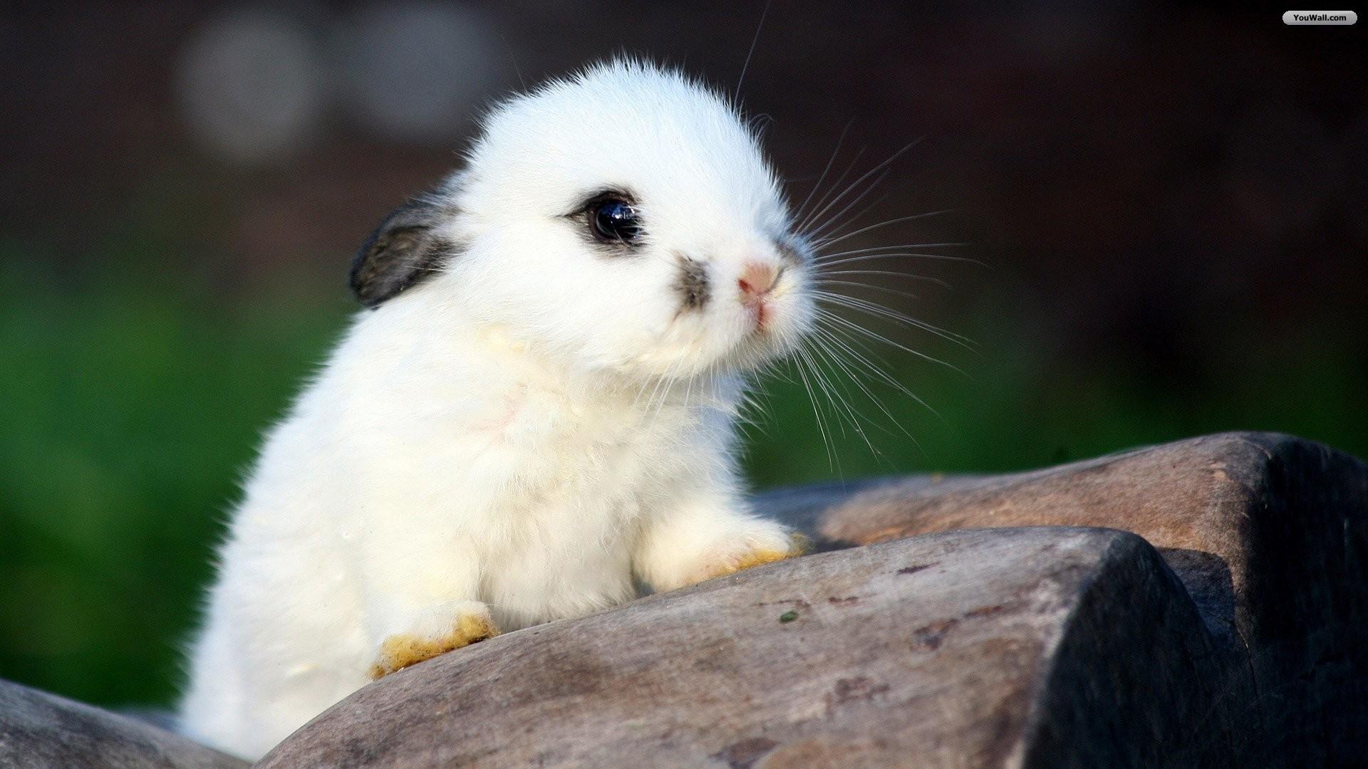 Little Cute Baby Girl Wallpaper Baby Bunny Wallpaper 183 ① Wallpapertag