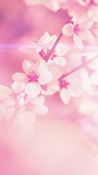 pretty backgrounds floral flowers phone cell wallpapertag