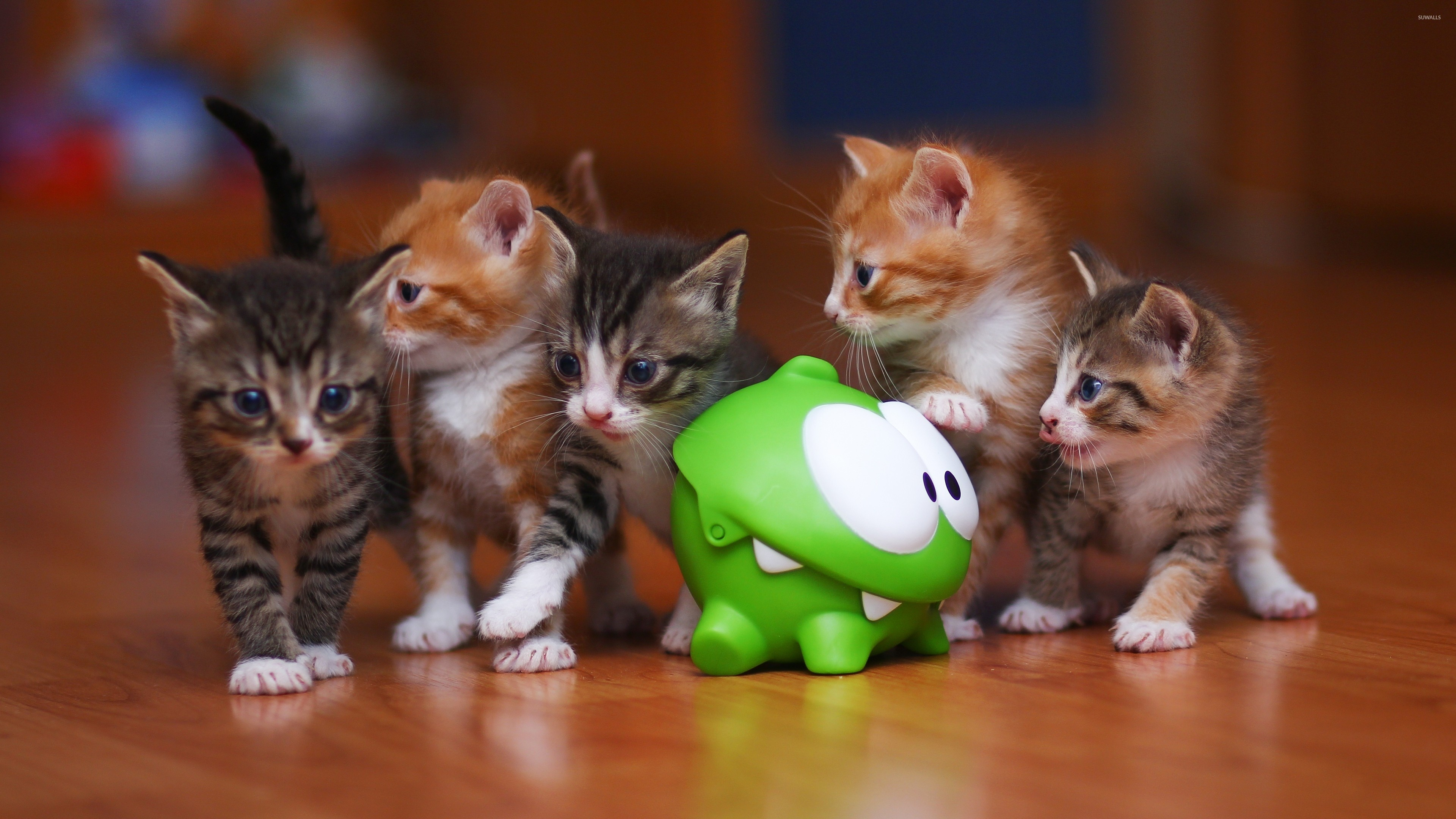 Cute Wallpapers Toast Kittens Wallpaper 183 ① Download Free Stunning Full Hd