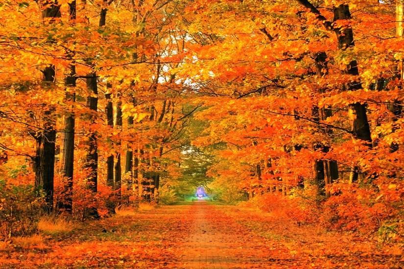 Free Fall Wallpaper For Iphone Autumn Desktop Wallpaper 183 ① Download Free Stunning Full Hd
