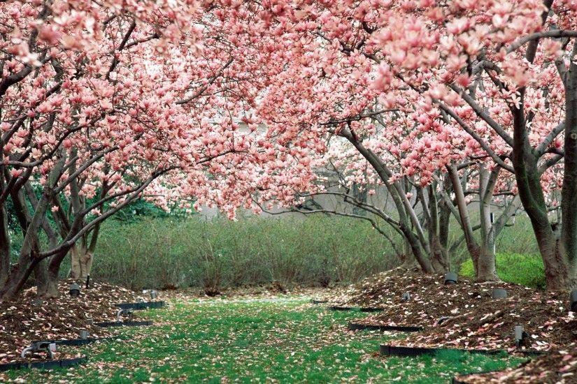 Jack Skellington Iphone Wallpaper Flower Garden Background 183 ① Wallpapertag