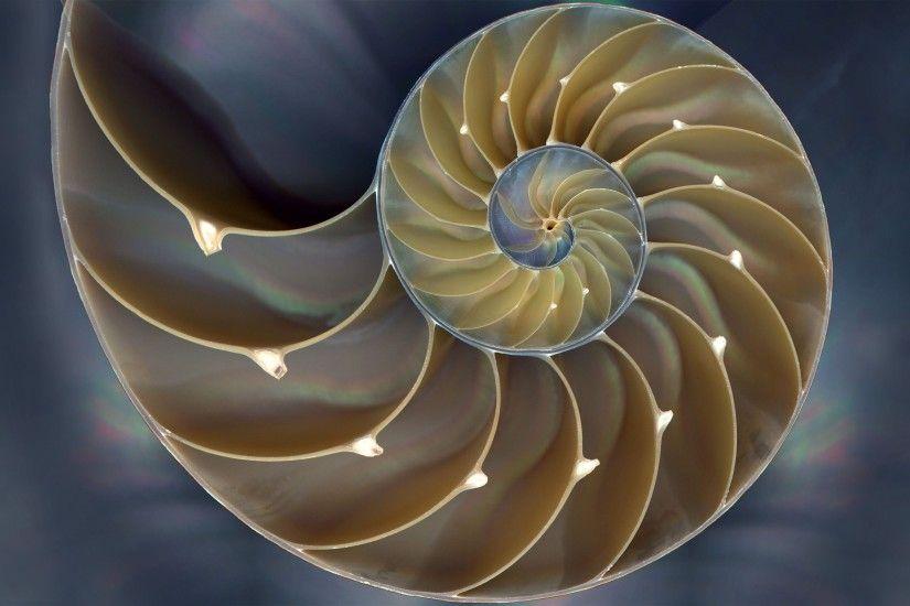 Sci Fi Wallpaper Iphone 6 Fibonacci Spiral Art Wallpaper 183 ① Wallpapertag