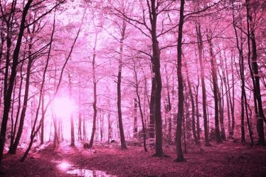 forest pretty enchanted nature background backgrounds wallpapers forests purple fantasy woods desktop hd wallpapertag phone
