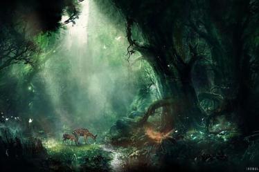 Fantasy Forest Wallpaper Gtv Nature Wallpaper