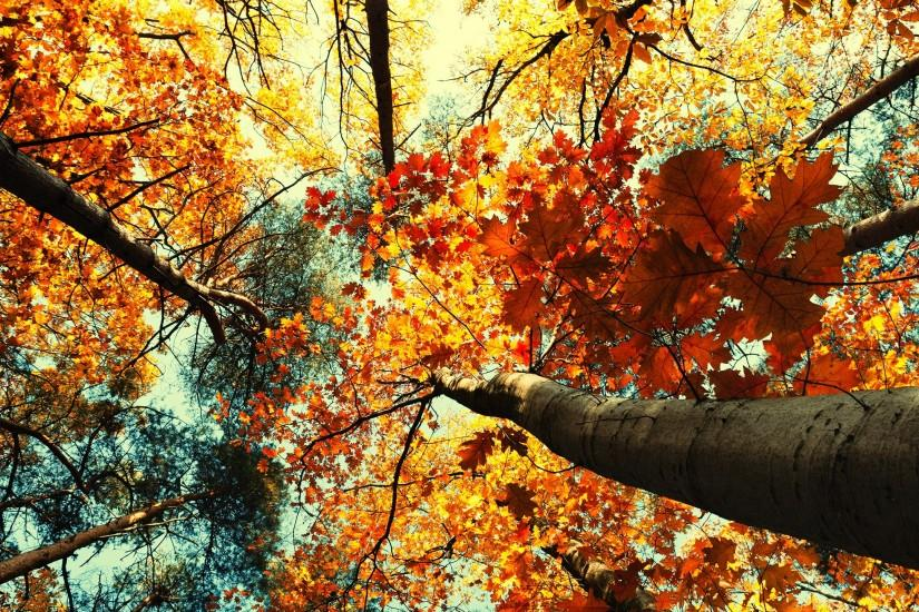Hello Fall Iphone Wallpaper November Wallpaper 183 ① Download Free Awesome Hd Backgrounds
