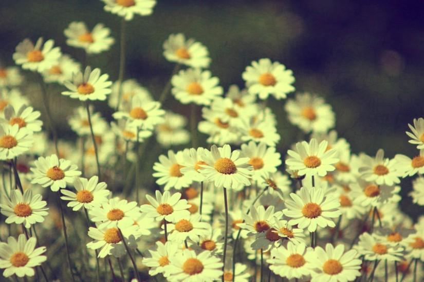 Iphone X Style Wallpaper For Iphone 6 Vintage Flower Wallpaper 183 ① Download Free Stunning Hd