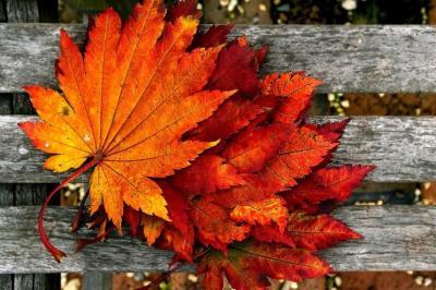 Fall wallpaper HD ·① Download free wallpapers for desktop ...