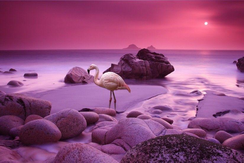 Full Hd Wallpapers Sunsets Flamingo Wallpaper 183 ① Wallpapertag