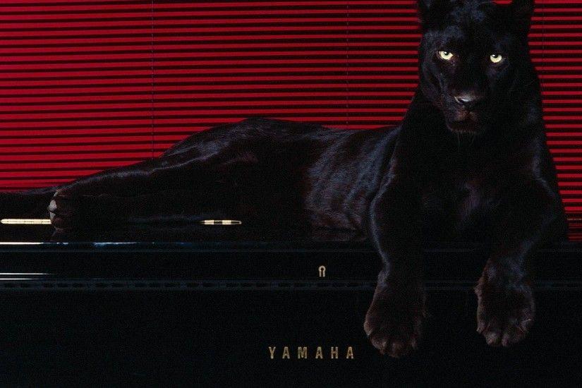 Black Panther Animal Wallpaper Pantera Wallpapers 183 ① Wallpapertag