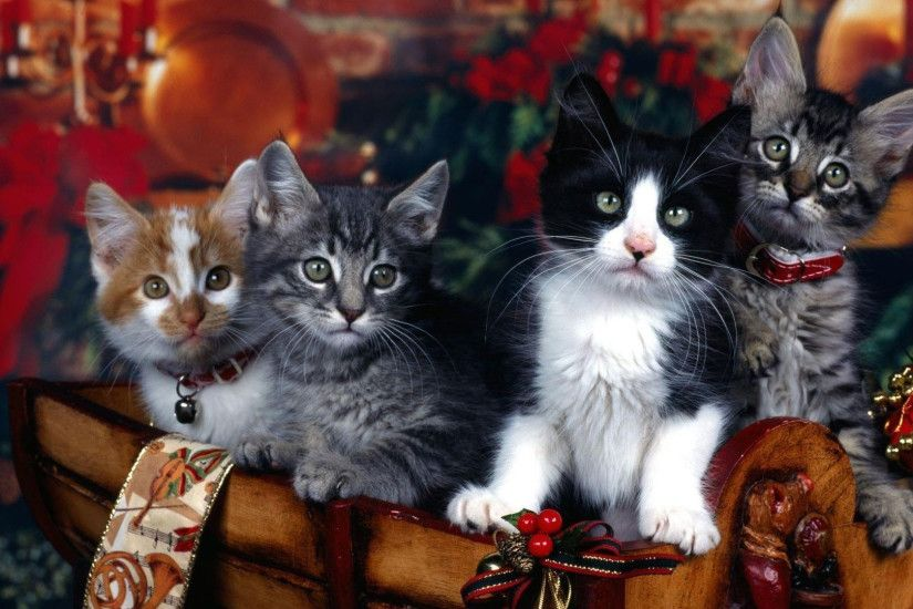 Cute Cats Wallpapers Android Christmas Kitten Wallpaper 183 ① Wallpapertag