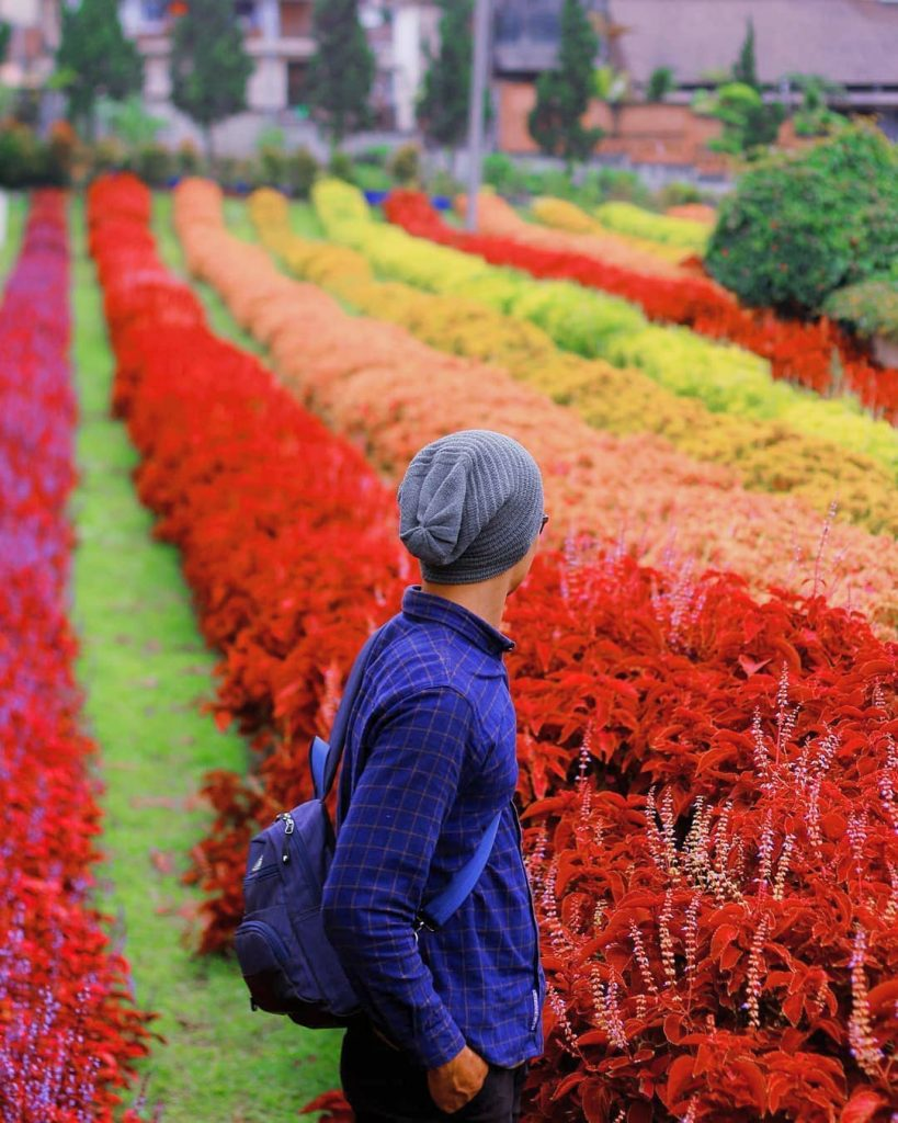Wallpaper Taman Bunga : wallpaper, taman, bunga, Taman, Bunga, Indonesia, 819x1024, Download, Wallpaper, WallpaperTip