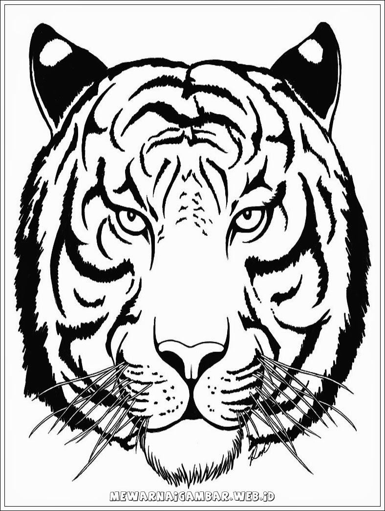 Mewarnai Gambar Harimau : mewarnai, gambar, harimau, Download, Wallpaper, Harimau, Bergerak, 788x1044, WallpaperTip