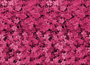 Awsome Backgrounds Wallpapers Pretty Pink Backgrounds Dark Pink Flower Background 780x564 Download HD Wallpaper WallpaperTip