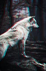 Wolf Wallpaper Iphone 651x1001 Download HD Wallpaper WallpaperTip