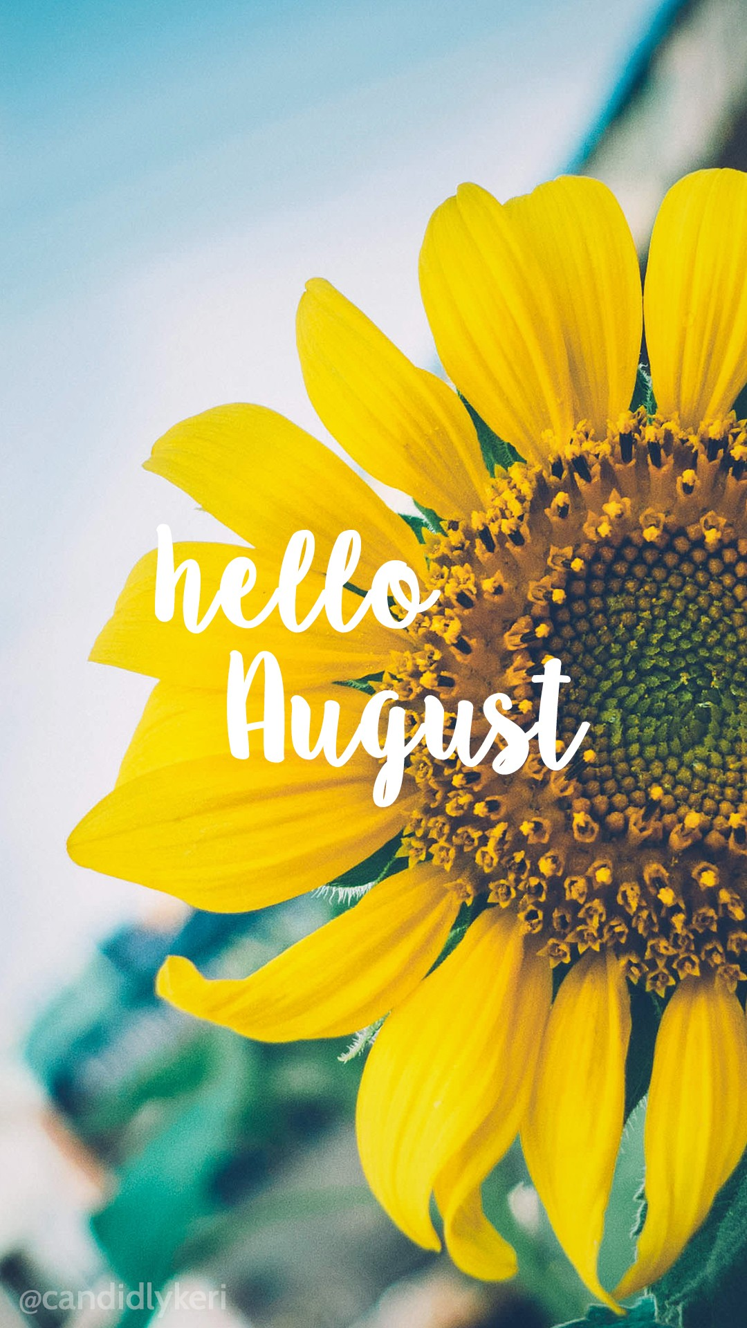 Happy Bright Wallpaper : happy, bright, wallpaper, Hello, August, Sunflower, Bright, Happy, Background, 1080x1920, Download, Wallpaper, WallpaperTip