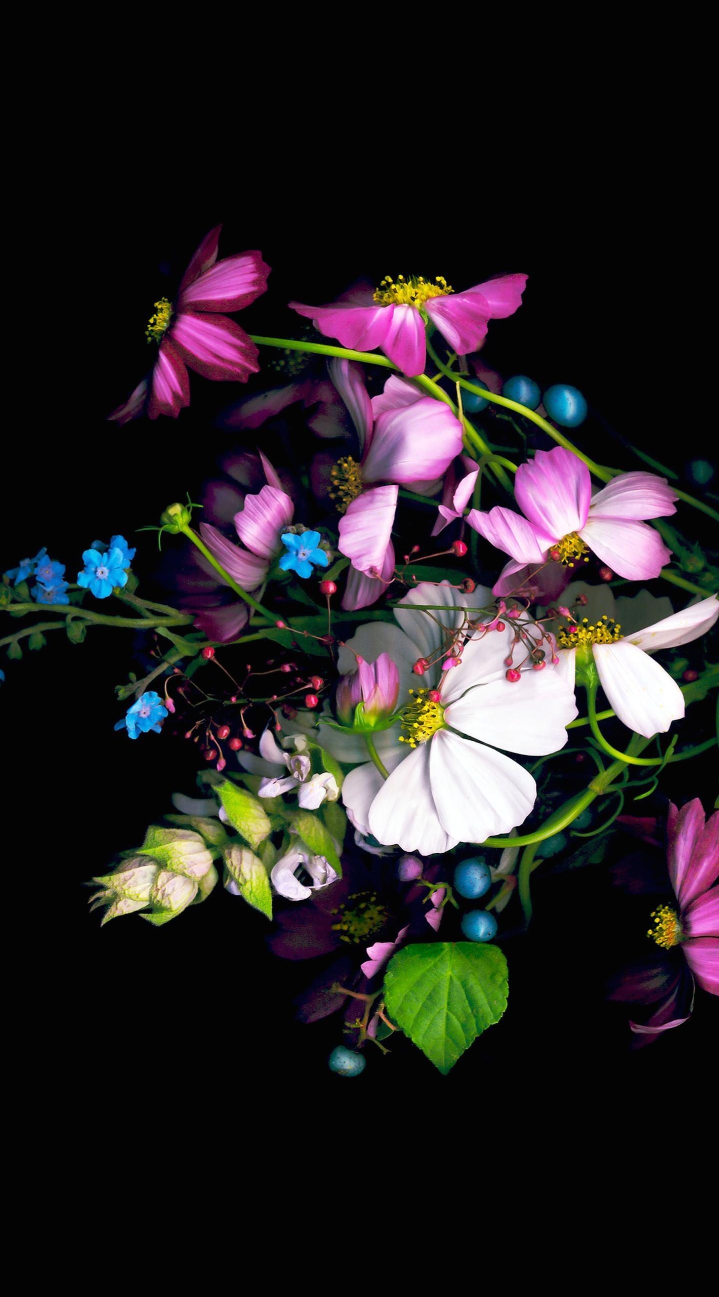 Background Bunga Hitam : background, bunga, hitam, Bunga, Hitam, Wallpapersc, Iphone6splus, Iphone, Wallpapers, Flowers, Black, 1438x2592, Download, Wallpaper, WallpaperTip