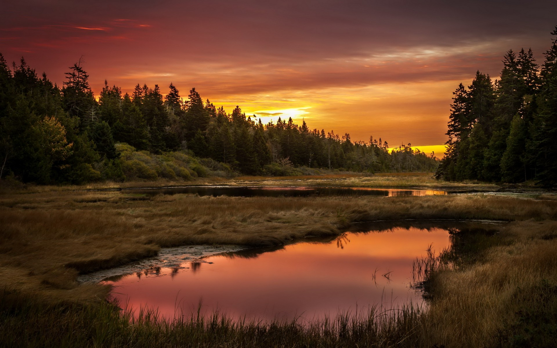 Sunset Lake Forest Landscape Reflection Wallpaper