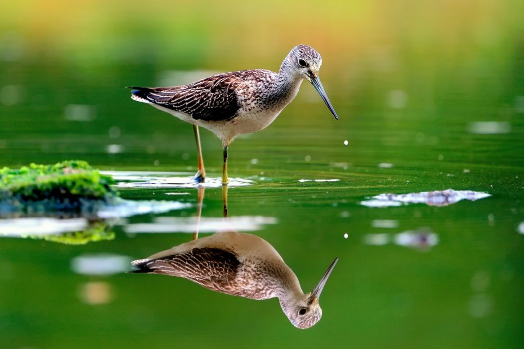 Nature Animal Bird Water Reflection Green Hd Wallpapers