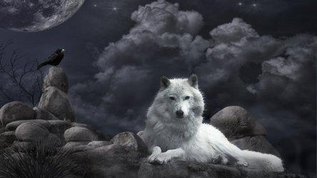 gothic wolf dark wallpapers wallpaperup