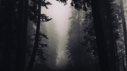 4k gothic forest desktop hd wallpapers ultra preview