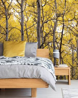yellow bedroom wallsauce tree wall wallpapers feature must favourite asset features autumn colorful