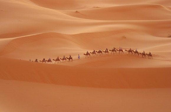 Amazing Desert Nature Picture with camels