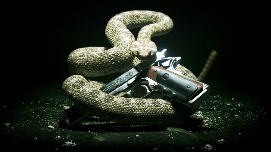 Snake HD Wallpaper Snake Photo Gallery