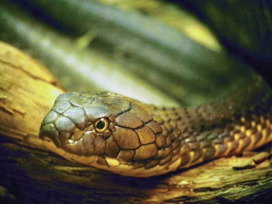 Snake Wallpapers Images And Animals Snake Pictures
