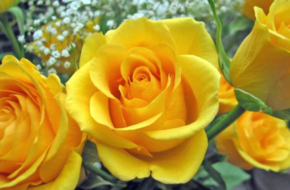 Yellow Flower Yellow Rose Photo Wallpaper Rose Flowers