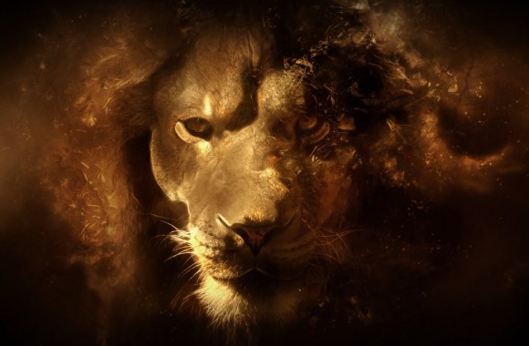 Awesome Lion Animal Abstract Free HD Wallpapers Image
